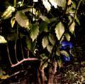[ロボット][レイチェル]密林のレイチェル