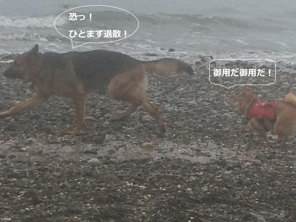f:id:shiba-inu-in-abroad:20170111050138j:plain