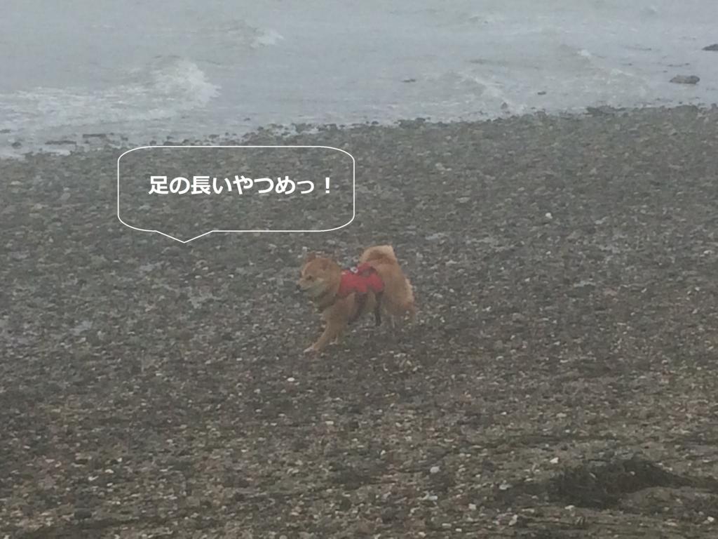 f:id:shiba-inu-in-abroad:20170111054307j:plain