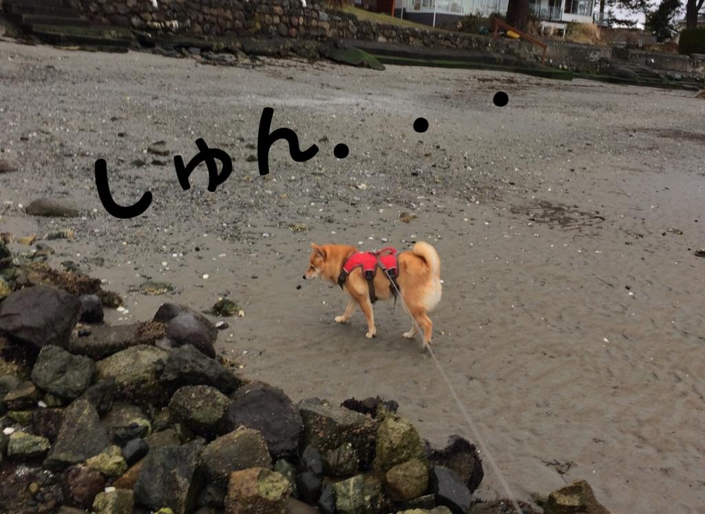 f:id:shiba-inu-in-abroad:20170305153414j:plain