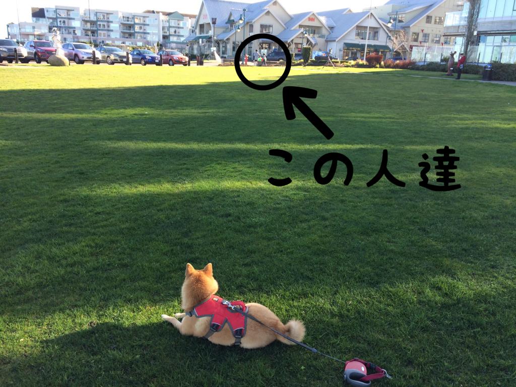 f:id:shiba-inu-in-abroad:20170404025200j:plain