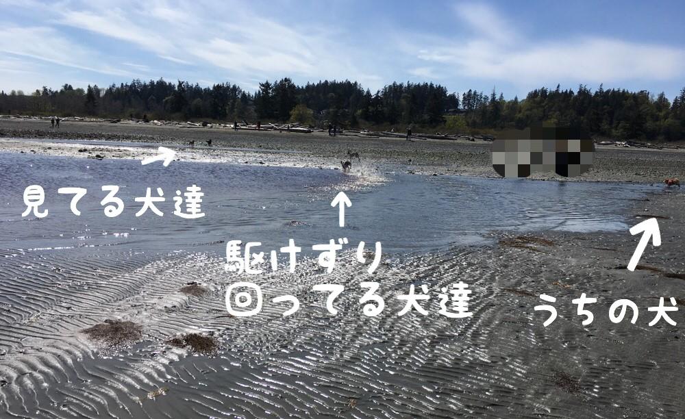 f:id:shiba-inu-in-abroad:20170419102310j:plain
