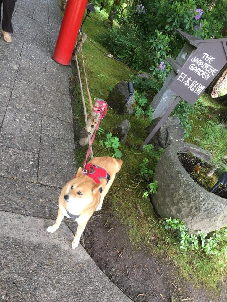 f:id:shiba-inu-in-abroad:20170624055140j:plain