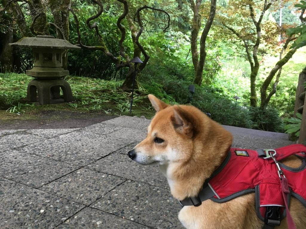 f:id:shiba-inu-in-abroad:20170624062724j:plain