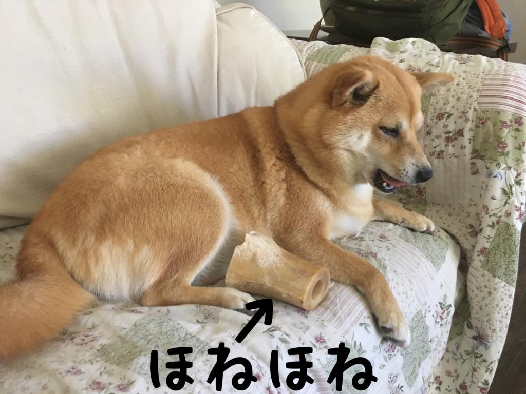 f:id:shiba-inu-in-abroad:20170630094406j:plain