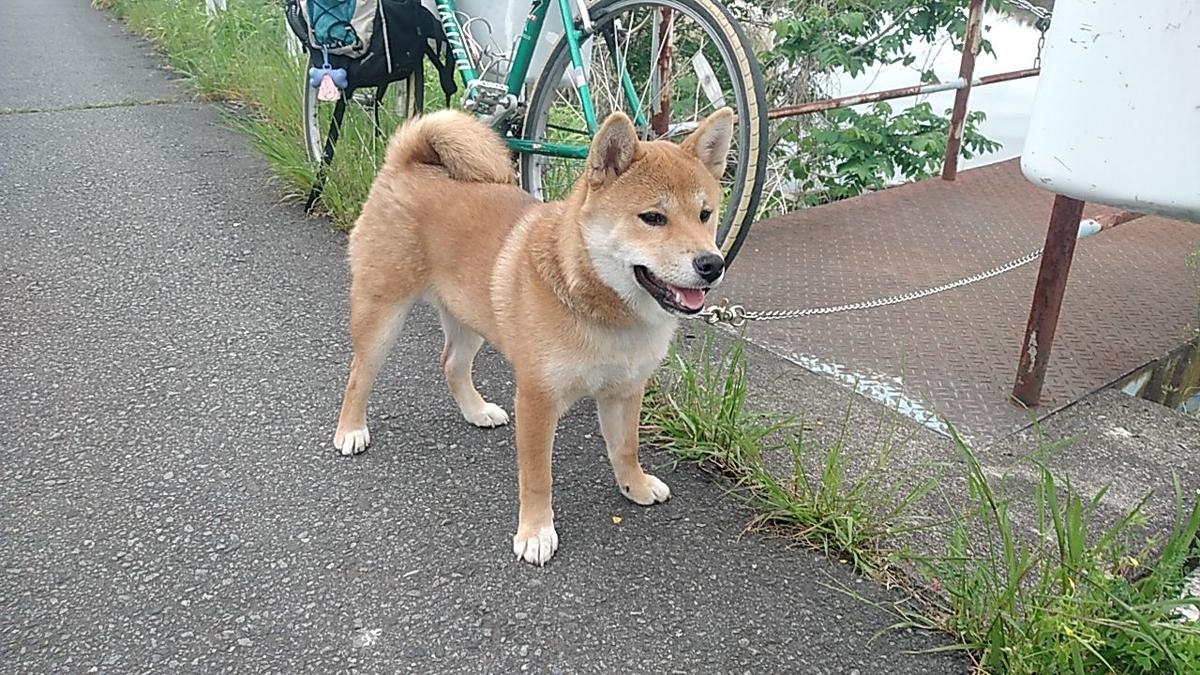 f:id:shiba-ken-gaooo:20210512094634j:plain