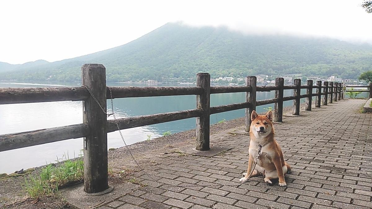 f:id:shiba-ken-gaooo:20210617053138j:plain