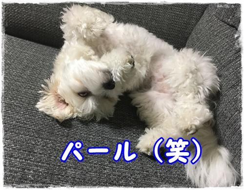 f:id:shibaccho:20160816183554j:plain