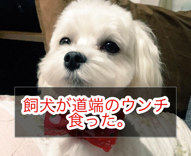 f:id:shibaccho:20170217202841j:plain