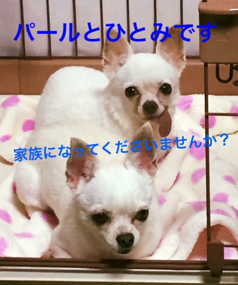 f:id:shibachomama:20170407023743j:plain