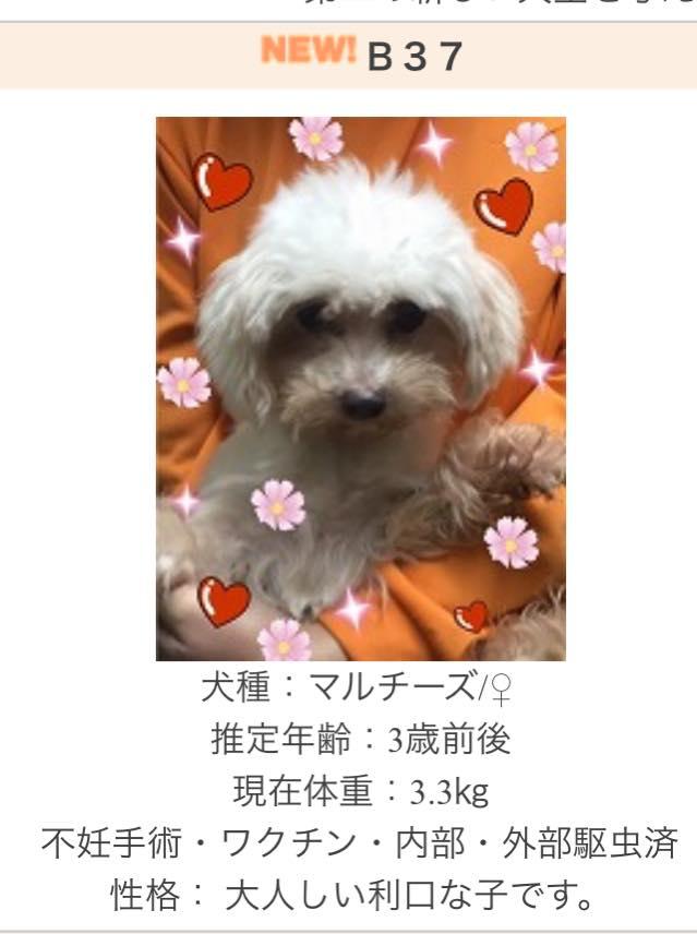 f:id:shibachomama:20170529145354j:plain