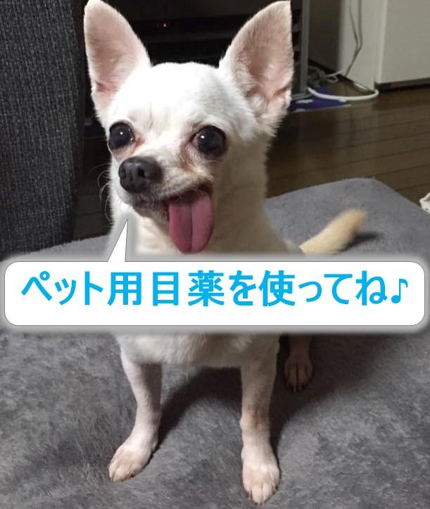f:id:shibachomama:20170806022813j:plain