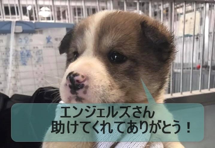 f:id:shibachomama:20170830035310j:plain