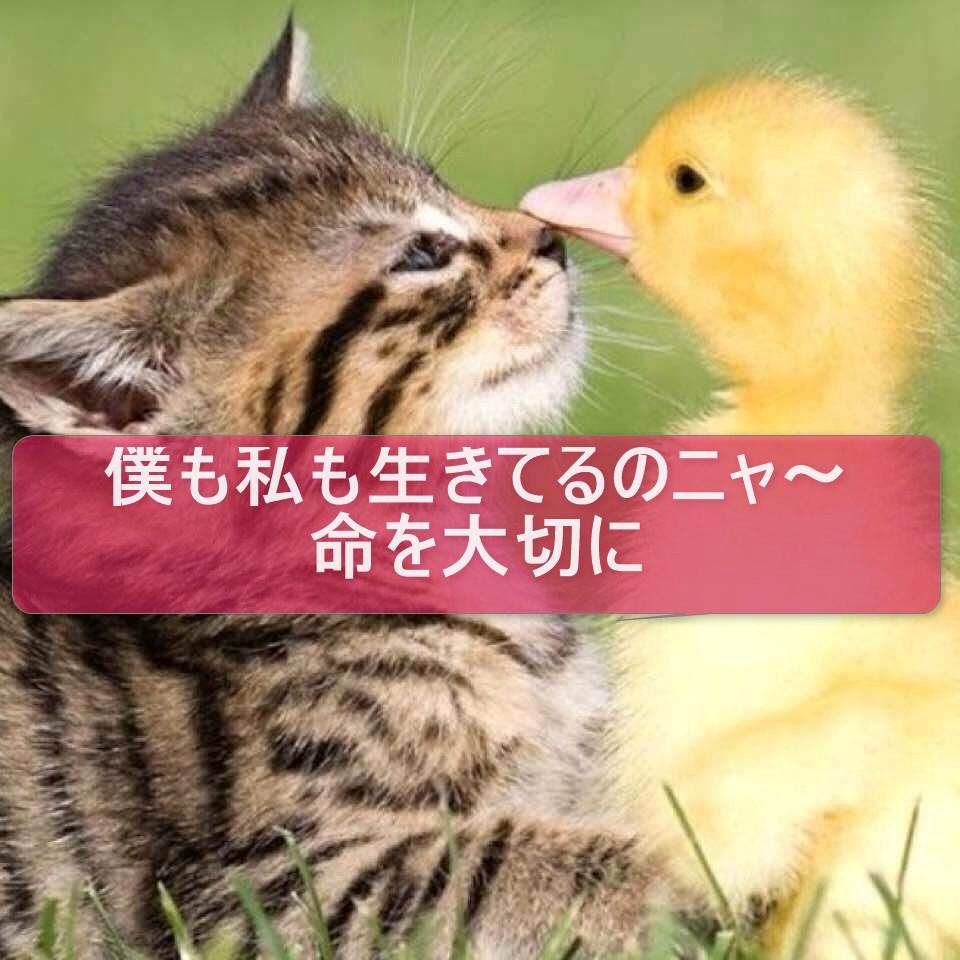 f:id:shibachomama:20170901022347j:plain