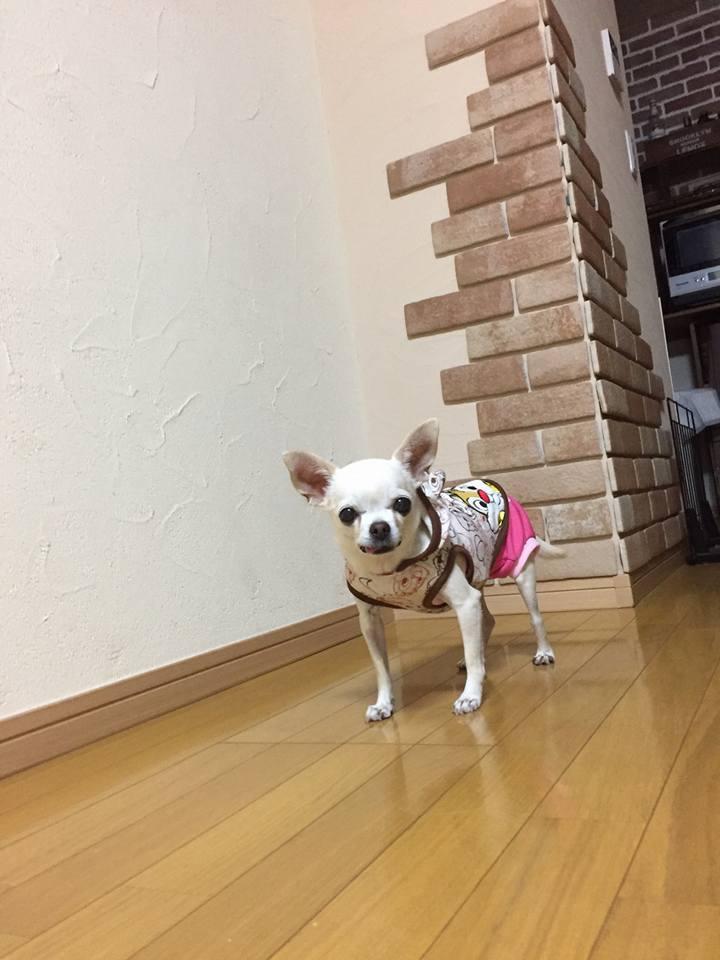 f:id:shibachomama:20171018192703j:plain