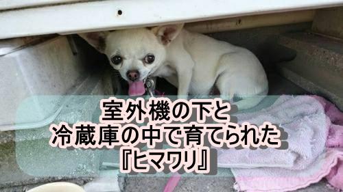 f:id:shibachomama:20171018194553j:plain
