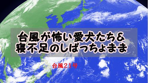 f:id:shibachomama:20171023223023p:plain