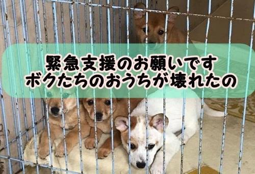 f:id:shibachomama:20171024000132j:plain