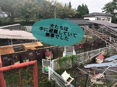 f:id:shibachomama:20171024001456j:plain