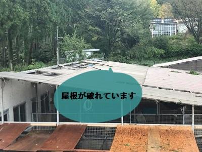 f:id:shibachomama:20171024001709j:plain