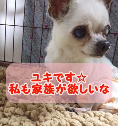 f:id:shibachomama:20171103014556j:plain