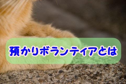 f:id:shibachomama:20171107225329j:plain