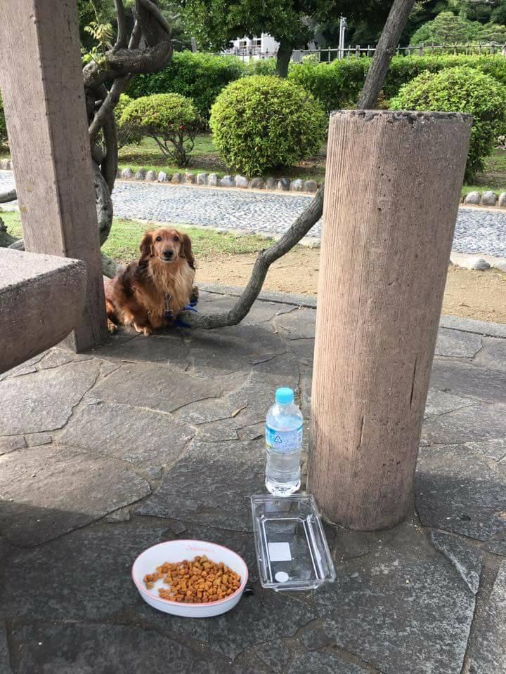 f:id:shibachomama:20171118234921j:plain