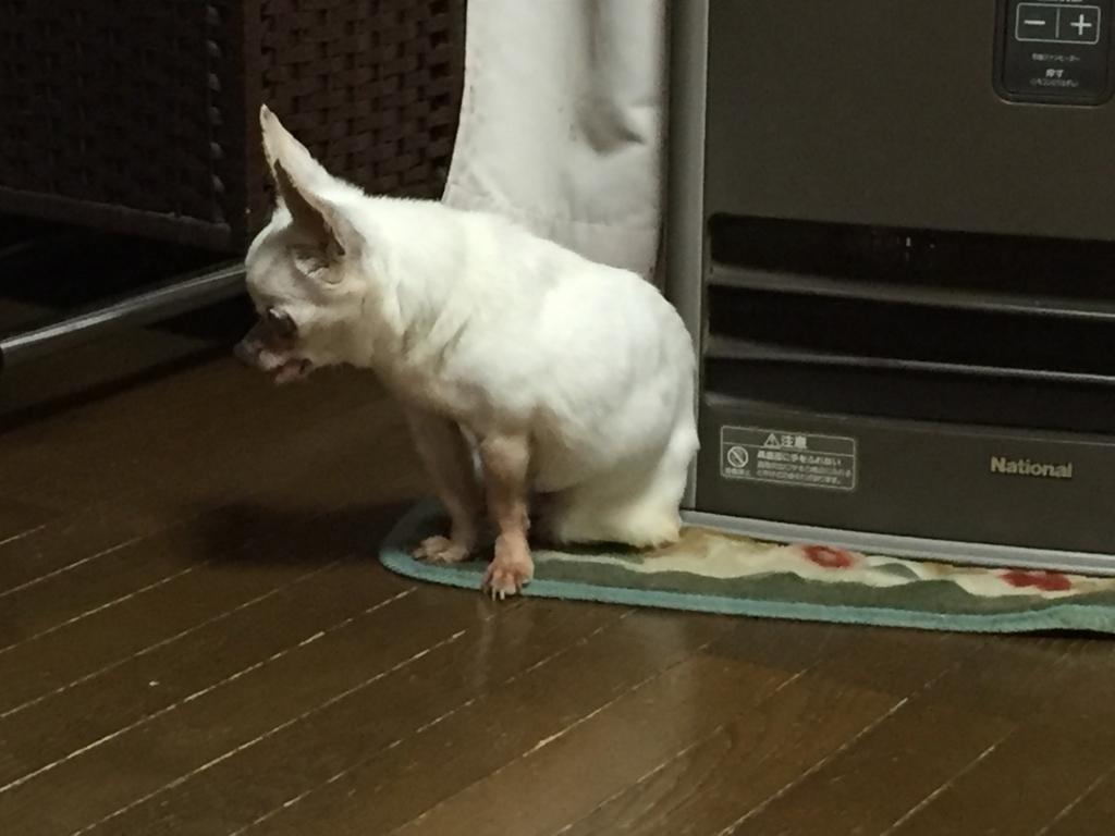 f:id:shibachomama:20180128001227j:plain