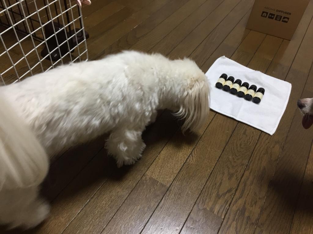 f:id:shibachomama:20180128001634j:plain