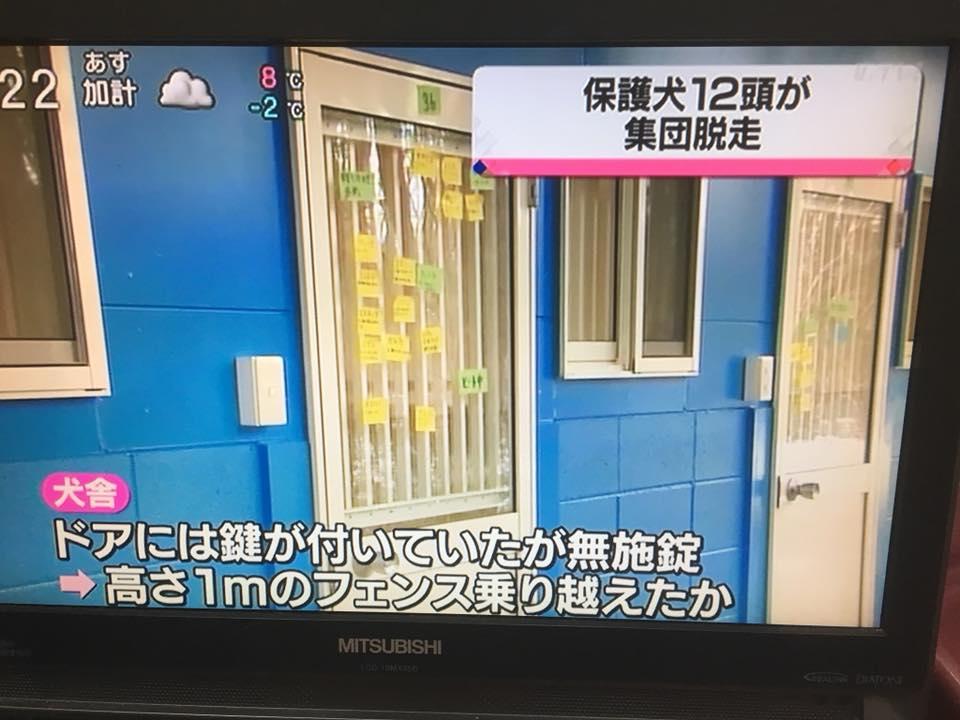 f:id:shibachomama:20180223020914j:plain