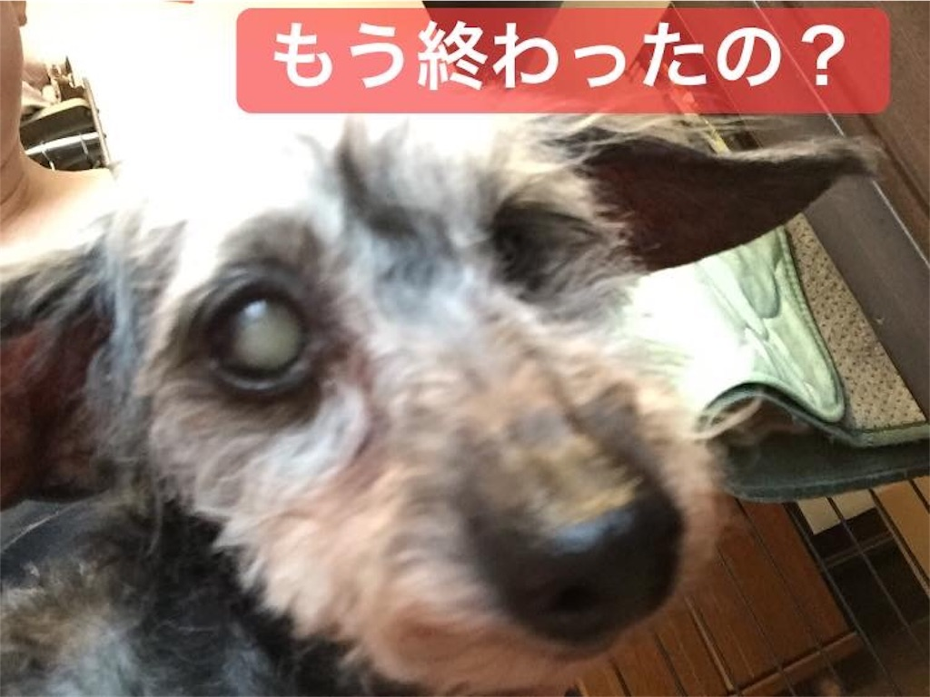 f:id:shibachomama:20190604173632j:image