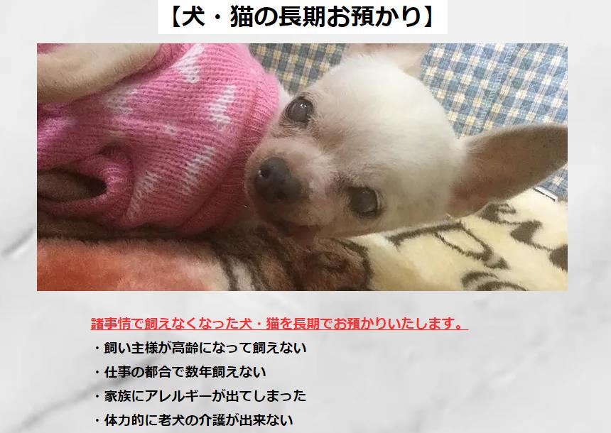 f:id:shibachomama:20190610182451p:plain