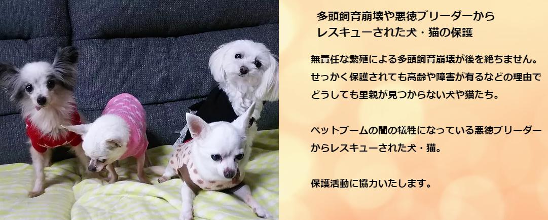 f:id:shibachomama:20190610182538p:plain