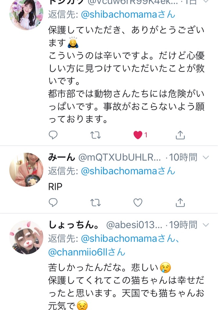 f:id:shibachomama:20190620212851j:image