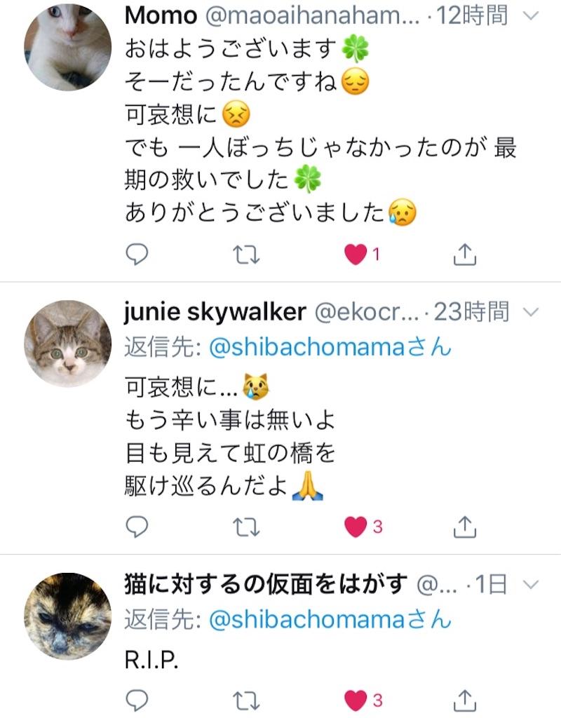 f:id:shibachomama:20190620212857j:image