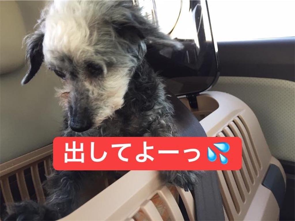 f:id:shibachomama:20190624214841j:image
