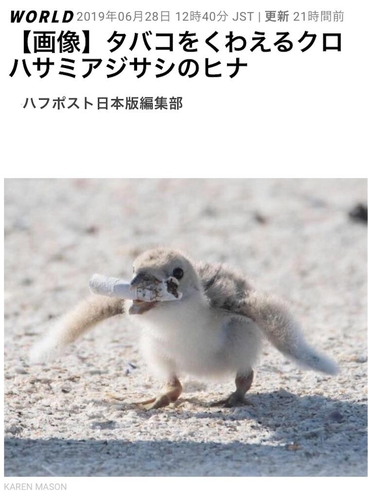 f:id:shibachomama:20190629100635j:image