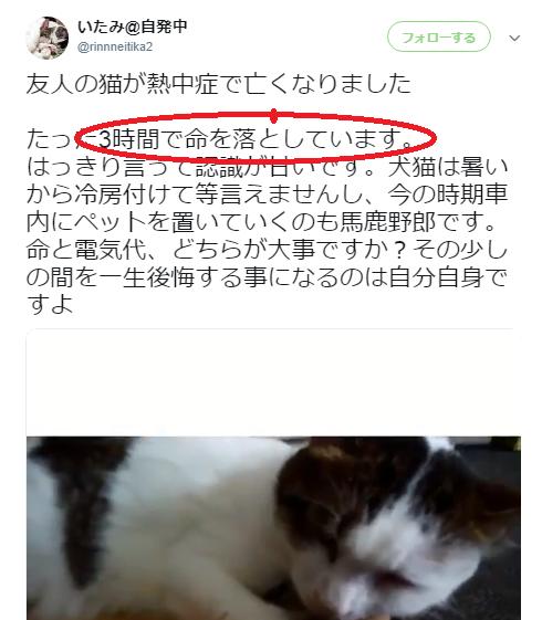 f:id:shibachomama:20190826152216p:plain