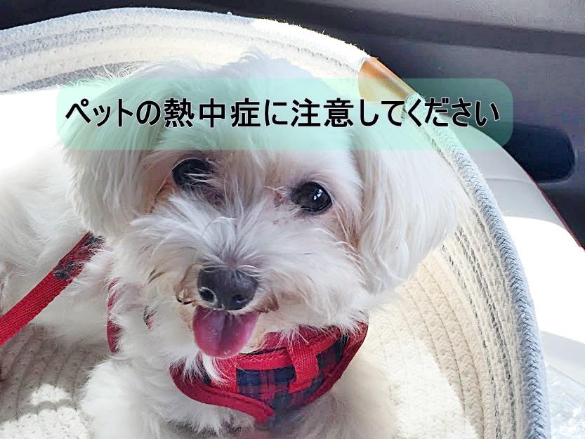 f:id:shibachomama:20190827215138j:plain