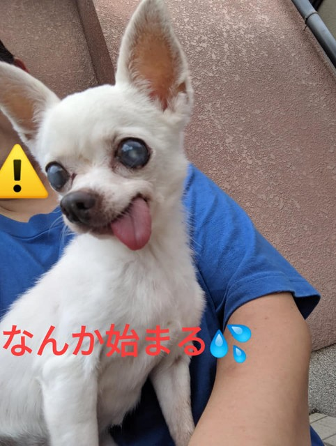 f:id:shibachomama:20190830141744j:image