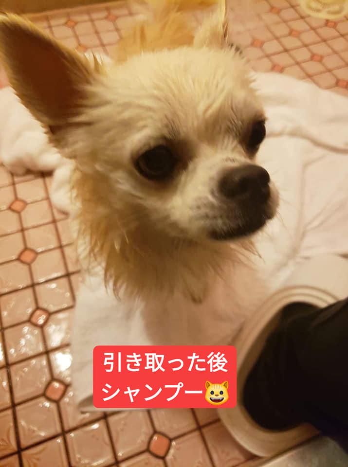 f:id:shibachomama:20191215182633j:plain