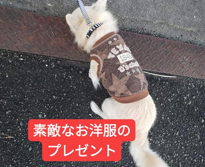 f:id:shibachomama:20191215182858j:plain