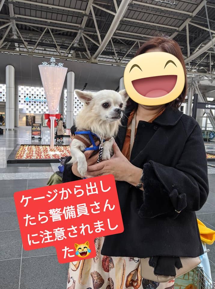 f:id:shibachomama:20191215185311j:plain