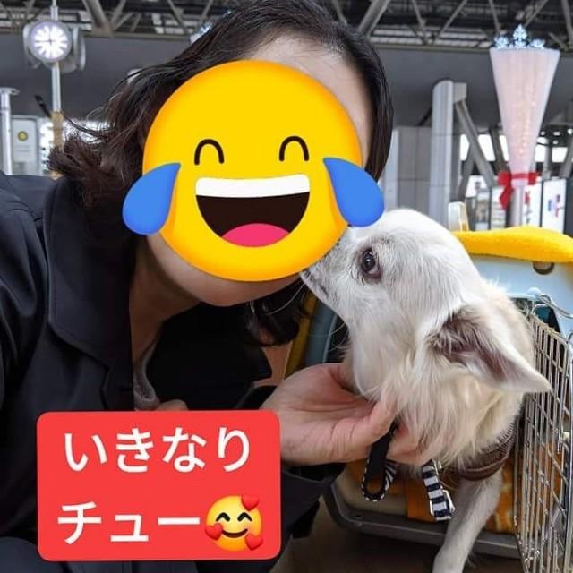 f:id:shibachomama:20191215233236j:plain