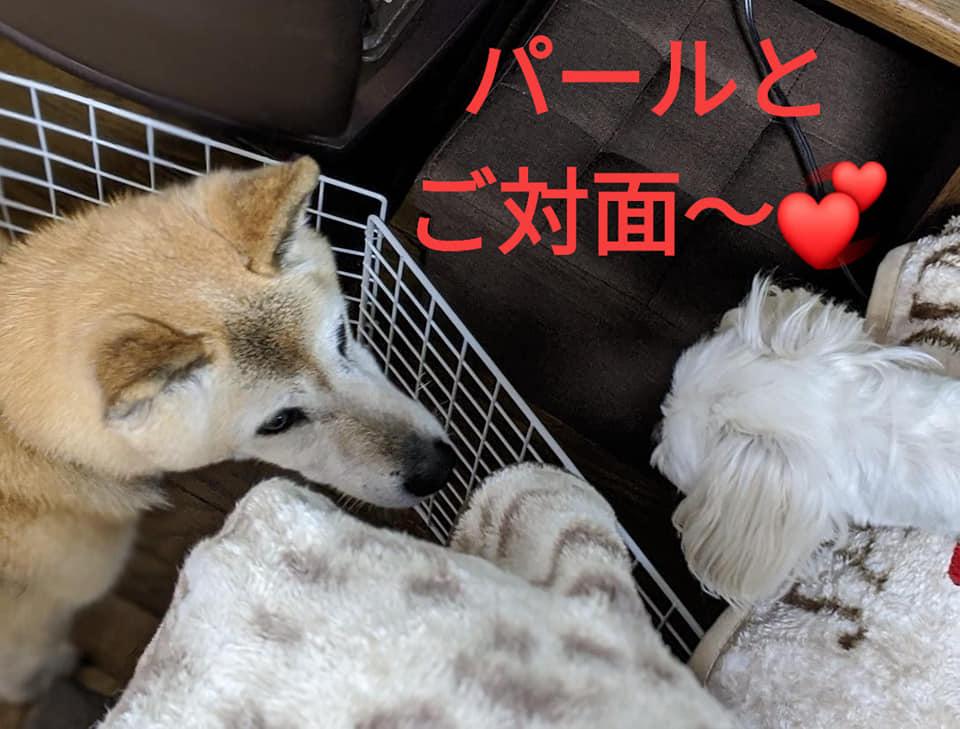 f:id:shibachomama:20200125112226j:plain