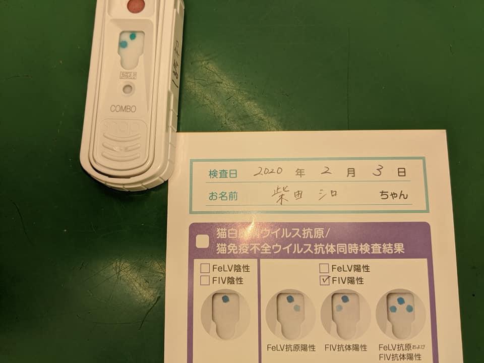f:id:shibachomama:20200224111422j:plain