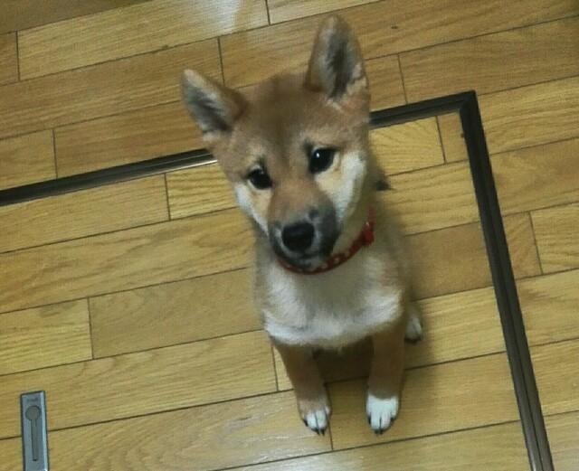 f:id:shibainumugi:20171107122741j:image