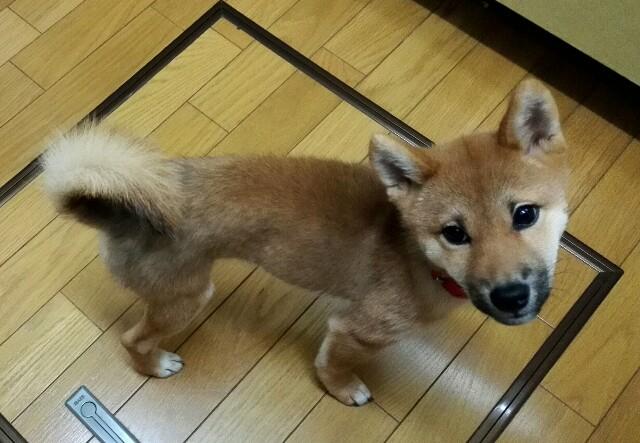 f:id:shibainumugi:20171111195830j:image