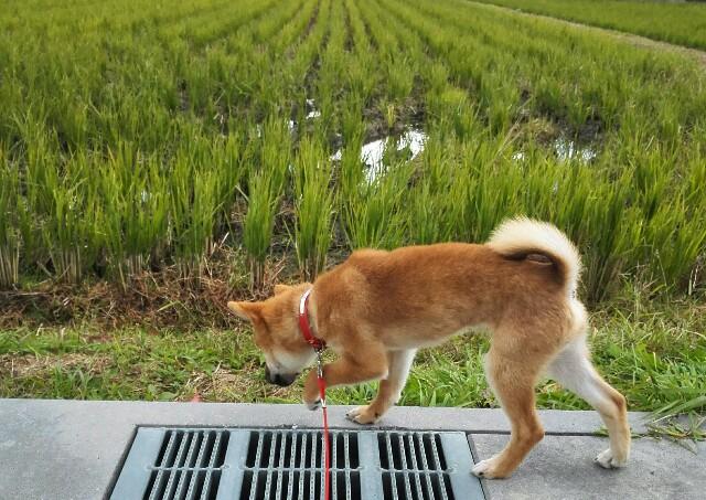 f:id:shibainumugi:20171120144040j:image