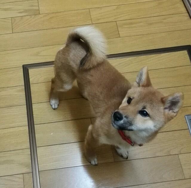 f:id:shibainumugi:20171121215136j:image